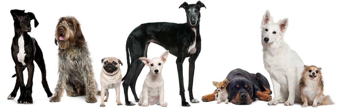 Hunde-Banner1